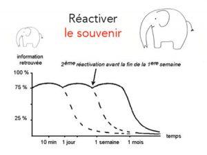 La réactivation, le secret pour mémoriser sur le long terme